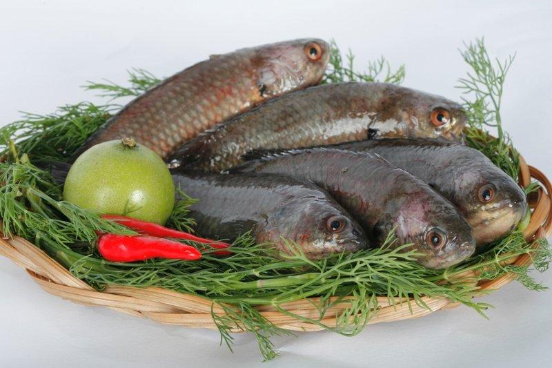 Kết quả hình ảnh cho cá rô đồng